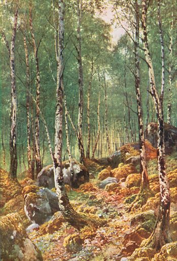A Birch-Wood in Springtime, by Loch Maree, Ross-Shire. Illustration for Bonnie Scotland by AR Hope Moncrieff (A&C Black, 1912).