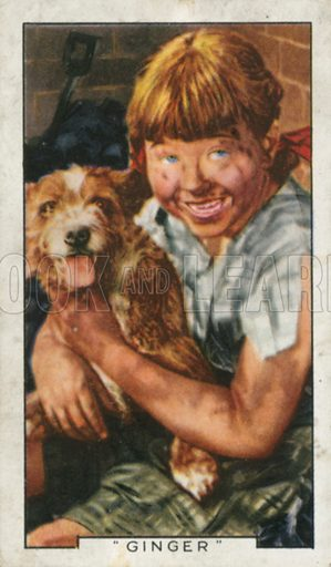 """""""Ginger"""". Film episodes. Gallaher cigarette card, early 20th century."""