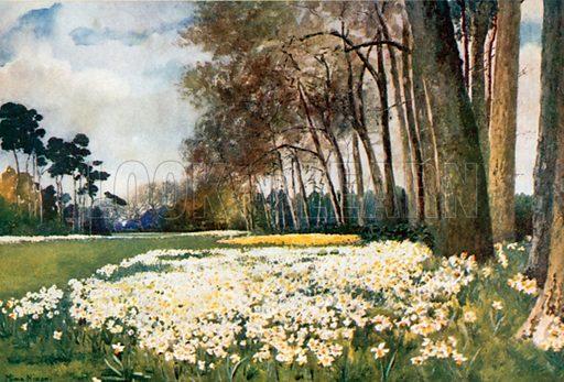 The Park, Sandringham. Illustration for Royal Palaces & Gardens (A&C Black, 1916).