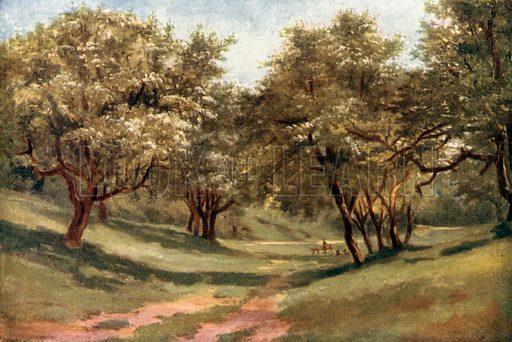 A Hawthorn Glade, Phoenix Park. Illustration for Beautiful Ireland (Gresham, c 1905).