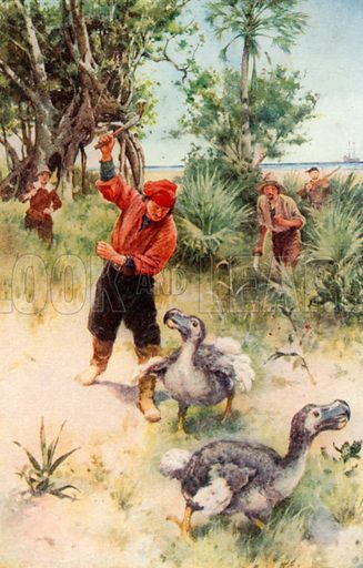 Dutch Sailors Pursuing Dodos. Illustration for Pioneers in South Africa by Harry Johnston (Blackie, c 1910).