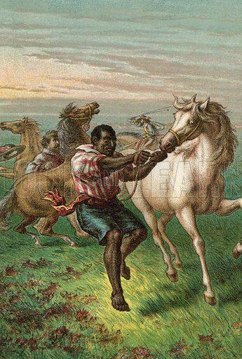 Garibaldi's Troopers breaking Wild Horses. Illustration for The Life and Times of Garibaldi (Walter Scott, c 1890).