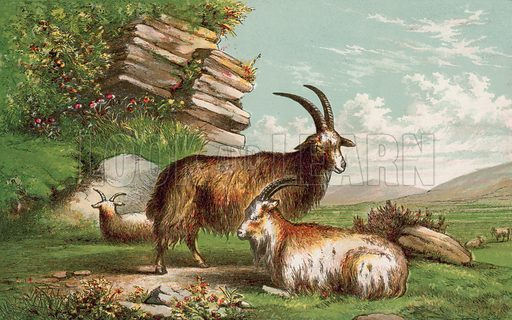 Goats. Illustration for Aunt Louisa's Sunday Picture Book, printed in Colours by Kronheim (Frederick Warne, c 1890).
