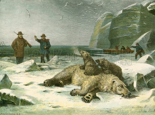Dead polar bear and cubs. Illustration for The Feathers and Fur Picture Book (George Routledge, c 1890). Engraving by Kronheim.