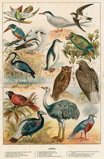 Birds. Illustration for Cassell's Natural History (1884).