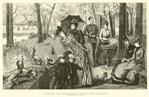 Feeding the Peacocks in Kensington Gardens. Illustration for The Graphic, 26 September 1891.