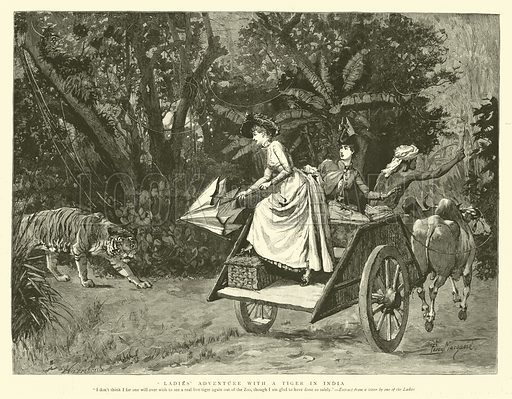 Ladies' Adventure with a Tiger in India. Illustration for The Graphic, 12 October 1889.