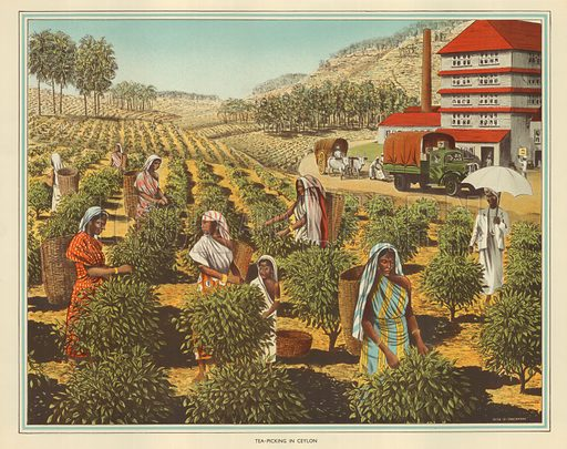 Tea packing in Ceylon. Macmillan poster.