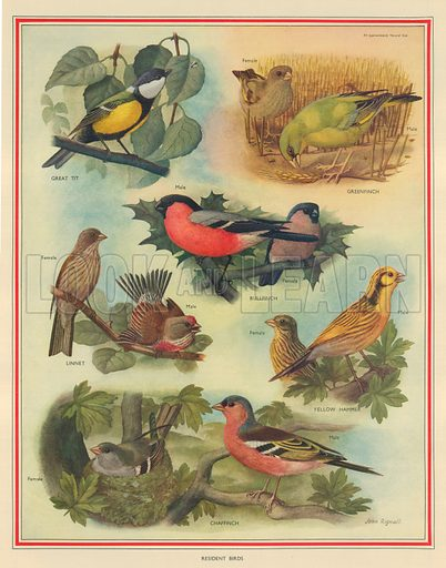 Resident Birds. Macmillan poster.