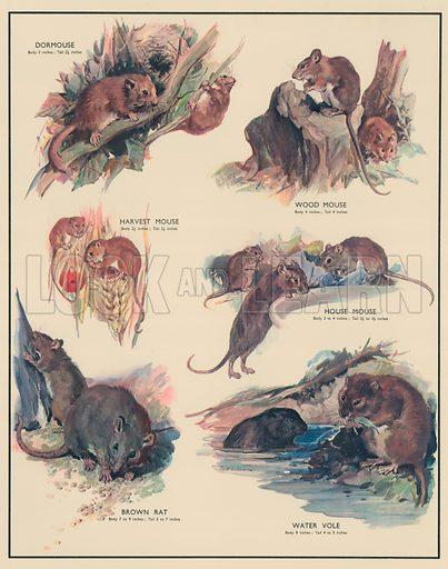 Gnawing Animals. Macmillan poster.