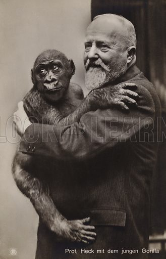 Professor Heck, with a young gorilla.  Postcard, early 20th century.
