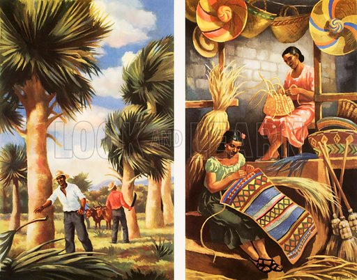 Macmillan's history Pictures. Raffia palms and hats in the West Indies. Original poster for sale for £50 including VAT and postage within the UK.