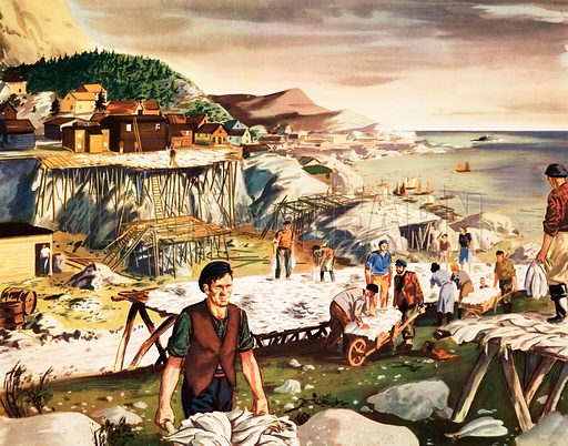 Macmillan's History Picture. Drying codfish in New Foundland. Original poster for sale for £50 including VAT and postage within the UK.