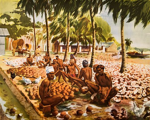 Macmillan's History Picture. Preparing copra in Ceylon. Original poster for sale for £50 including VAT and postage within the UK.