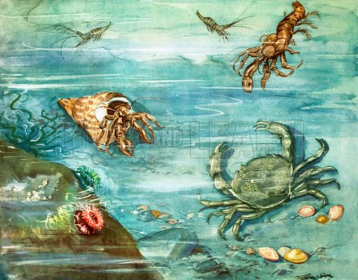 The crab with a long tail. Original poster for sale for £50 including VAT and postage within the UK.