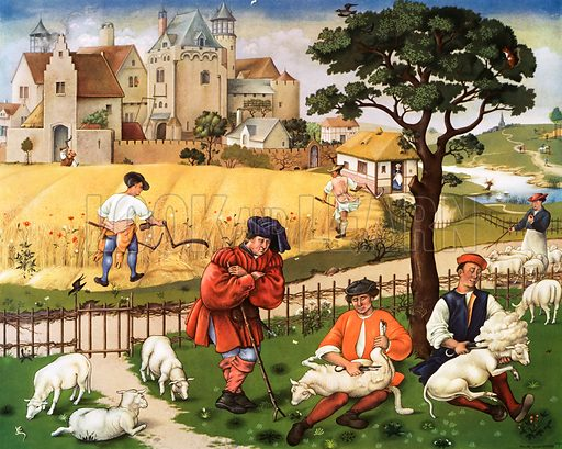 Macmillan's History pictures. Sheep shearing and reaping 15th C Original poster for sale for £50 including VAT and postage within the UK.