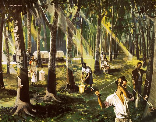 A rubber plantation in Malaya. Macmillan poster. Original poster for sale for £50 including VAT and postage within the UK.