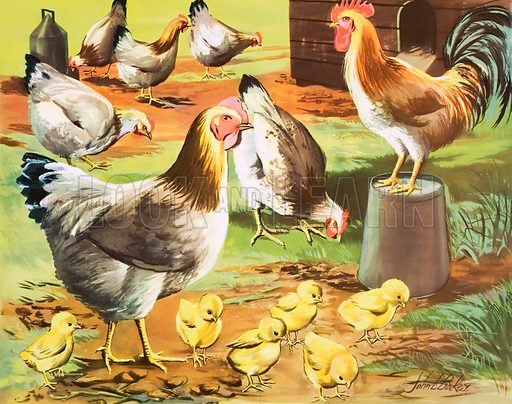 A hen and her chicks. Macmillan poster. Original poster for sale for £50 including VAT and postage within the UK.