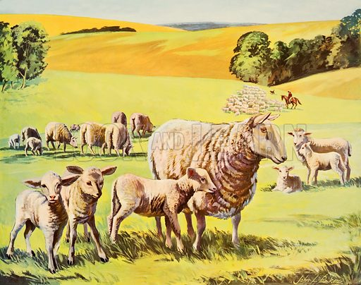 Sheep and lambs. Macmillan poster. Original poster for sale for £50 including VAT and postage within the UK.