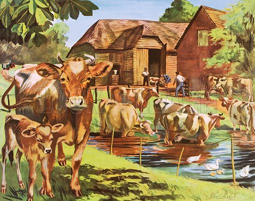 Cows. Macmillan poster. Original poster for sale for £50 including VAT and postage within the UK.