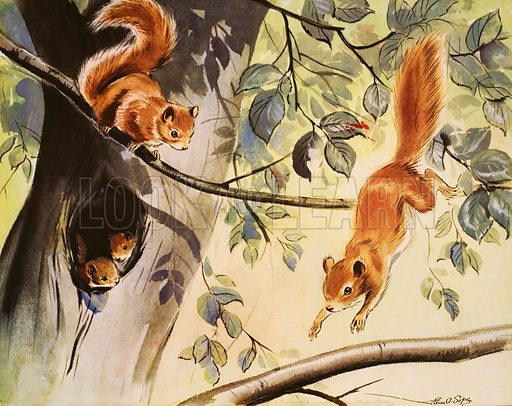 Red squirrels. Macmillan poster. Original poster for sale for £50 including VAT and postage within the UK.