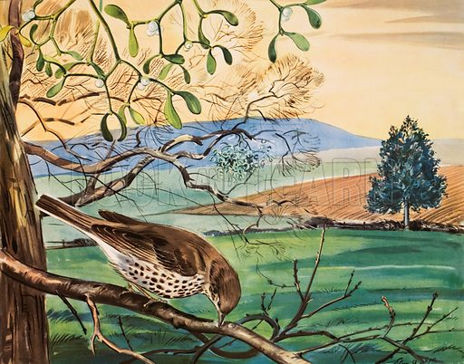 The missel-thrush and the mistletoe. Macmillan poster. Original poster for sale for £50 including VAT and postage within the UK.