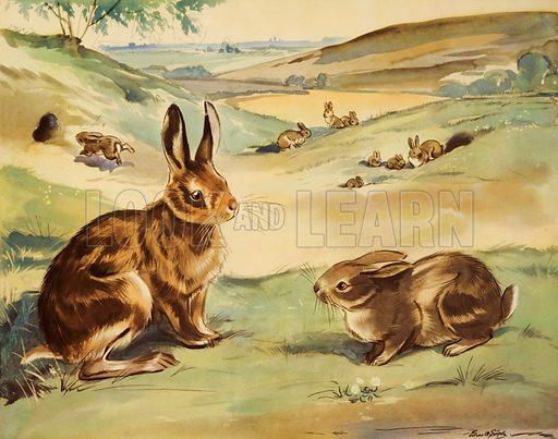Wofflly the rabbit and quick-ears the hare. Macmillan poster. Original poster for sale for £50 including VAT and postage within the UK.