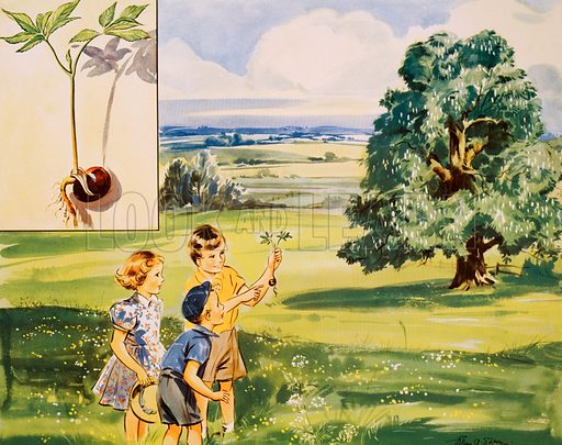 The wonderful conker. Macmillan poster. Original poster for sale for £50 including VAT and postage within the UK.