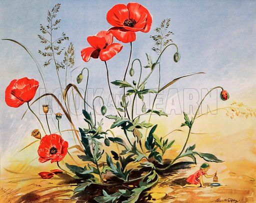 The elf and the poppy. Macmillan poster. Original poster for sale for £50 including VAT and postage within the UK.