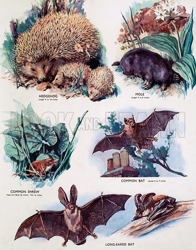 Insect eating animals. Macmillan poster. Original poster for sale for £50 including VAT and postage within the UK.
