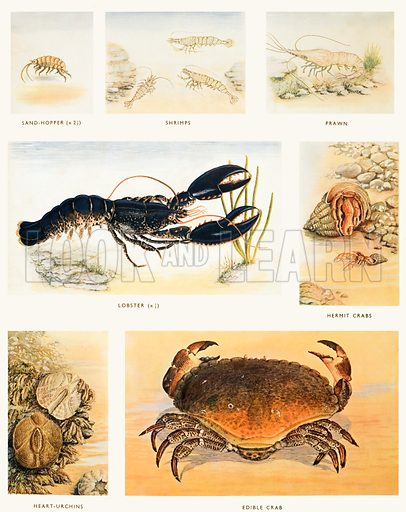 Crustacea. Macmillan poster. Original poster for sale for £50 including VAT and postage within the UK.