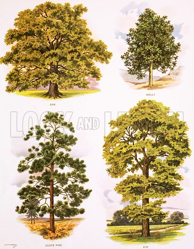 Trees. Macmillan poster. Original poster for sale for £50 including VAT and postage within the UK.