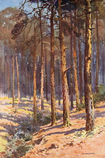 Talbot Woods, Bournemouth. Illustration for Our Beautiful Homeland series (various, early 20th cent).