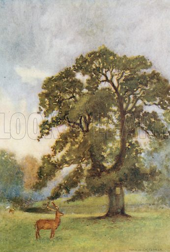 The Abbot's Oak, Woburn. Illustration for The Greater Abbeys of England by Abbot Gasquet (Chatto & Windus, 1908).