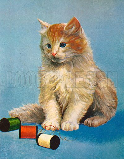 Kitten playing with cotton reels.