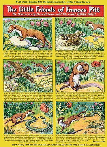Little Friends of Frances Pitt. Comic strip from Playhour, 13 August 1955.