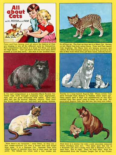 All About Cats. Feature strip from Playhour, 12 July 1957.