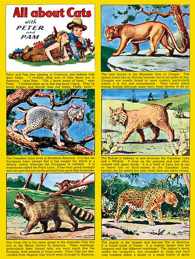 All About Cats. Feature strip from Playhour, 19 July 1957.