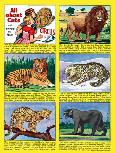 All About Cats. Feature strip from Playhour, 2 August 1957.