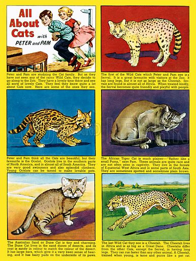 All About Cats. Feature strip from Playhour, 9 August 1957.