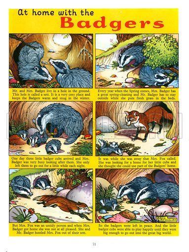 At Home with the Badgers. Feature from Playhour Annual 1957.