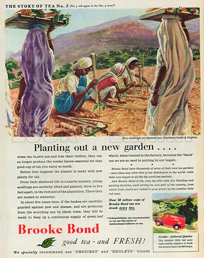 Brooke Bond Advertisement, 1954.