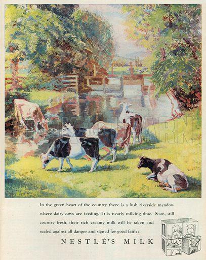 Nestle's Milk Advertisement, 1950.