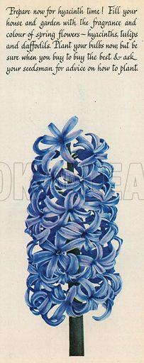 Flowers Advertisement, 1953.