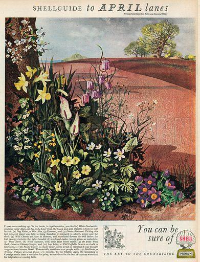 Shell Advertisement, 1954.