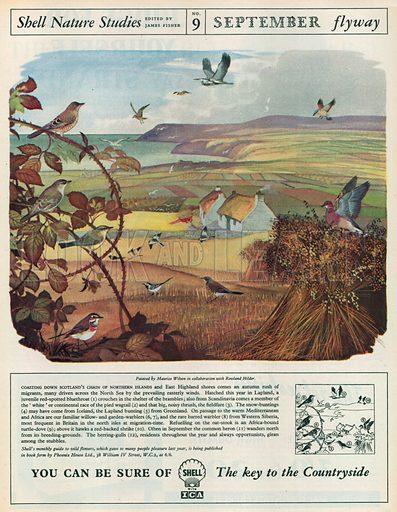 Shell Nature Studies Advertisement, 1955.