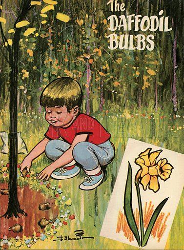 The daffodil bulbs.  Illustration from Teddy Bear magazine.