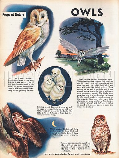 Owls shows a Barn Owl and a Little Owl around a central picture of baby owls.