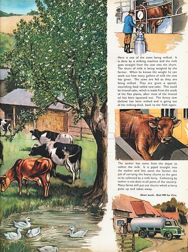 The Dairy Farm shows milking time with British Friesians being herded to the shed by the farmer, the whole surrounded by vignettes of farm-life.