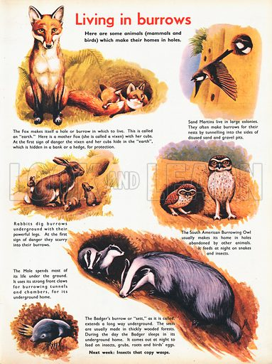Living in burrows shows some mammals and birds which live in holes.